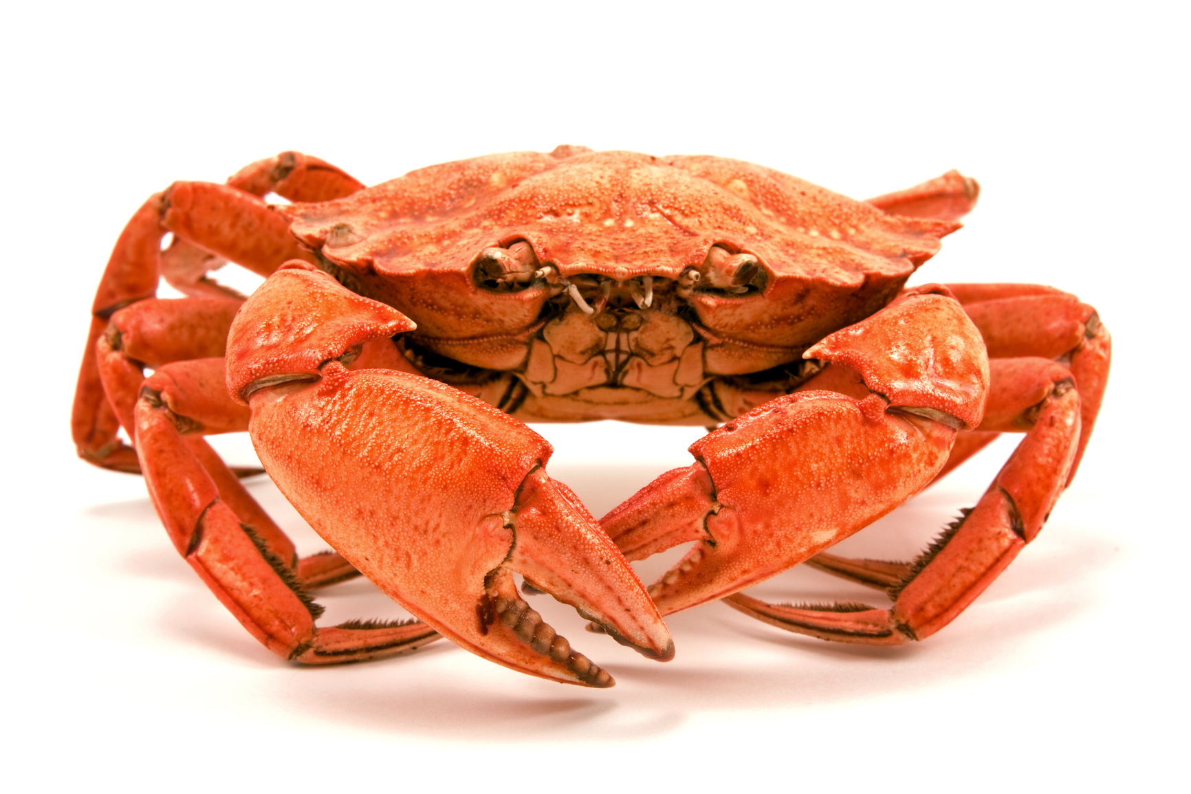 Red Boiled Crab The Atlas Edge Staffing Services